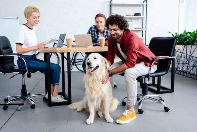Pets at work can boost the morale of all employees.