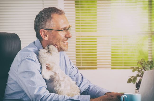 Healthy workers are more productive and pets at work can help.