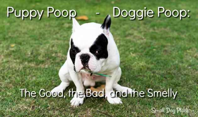 Puppy Poop - Doggie Poop:  The Good, the Bad, and the Smelly