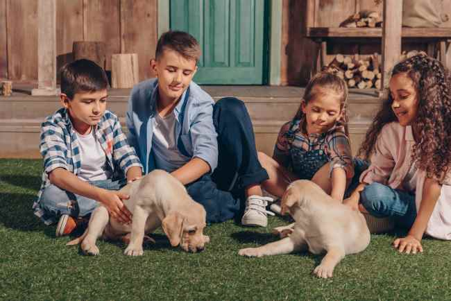 Questions to Ask Dog Breeders