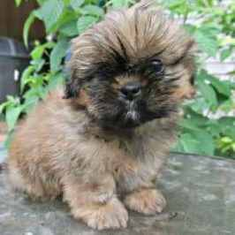 The Ultimate resource of finding the perfect name for your new dog or puppy.