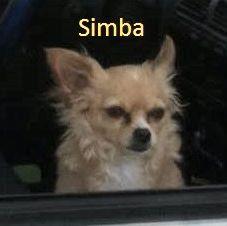 Simba from Texas