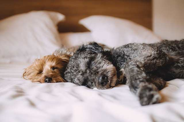 Breed differences may also influence the dog's sleeping patterns.