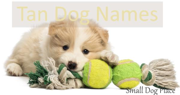 Tan Dog Names for that Cream or Beige Dog