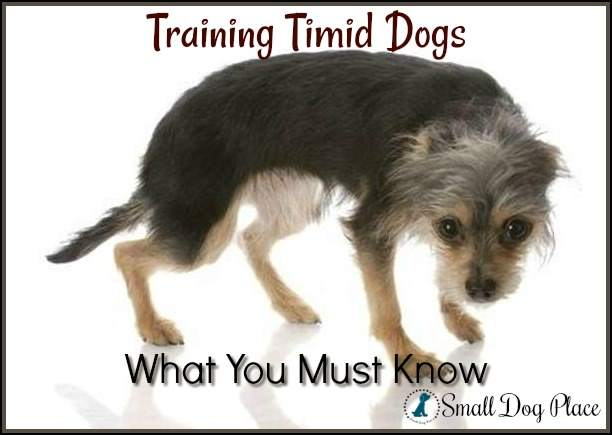 Training Timid Dogs:  What You Must Know