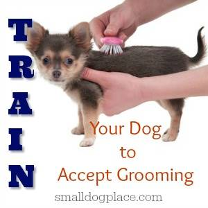 Train Your Dog to Accept Grooming