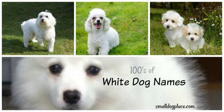 Giant List Of White Dog Names