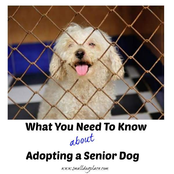 What you need to know before adopting a senior dog.