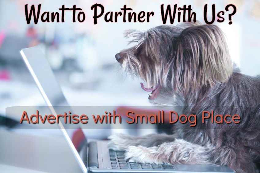 Advertise with Small Dog Place