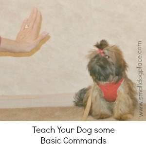 Teach Your Dog Some Basic Commands