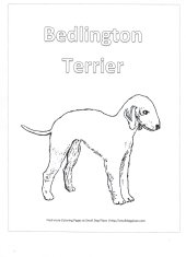 Bedlington Terrier Coloring Page