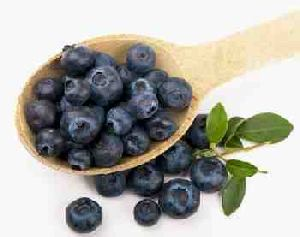 Fruits ad Vegetables for Dogs:  Blueberries
