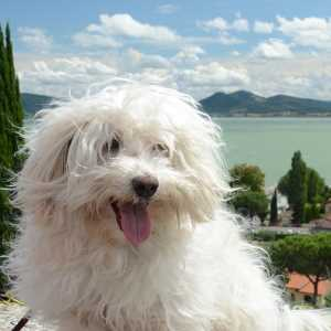 All Small Dog Breed List: A to Z with Pictures & Descriptions