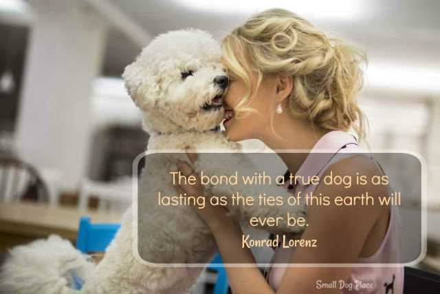 Bond with your dog quote:  The bond with a true dog is as lasting as the ties of this earth will ever be.  Konrad Lorenz