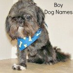 Boy Dog Names