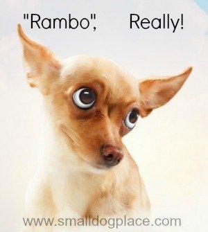 Boy Puppy Names Beginning with Q-R