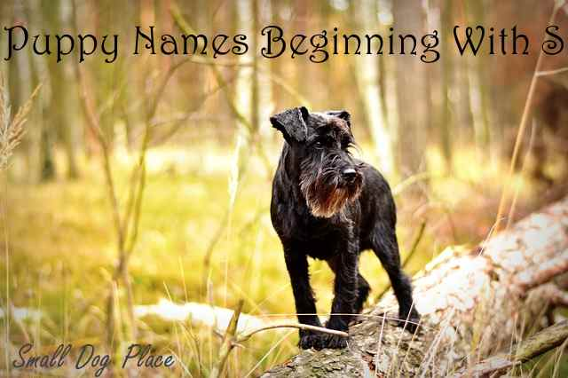 Boy Puppy Names Beginning With S