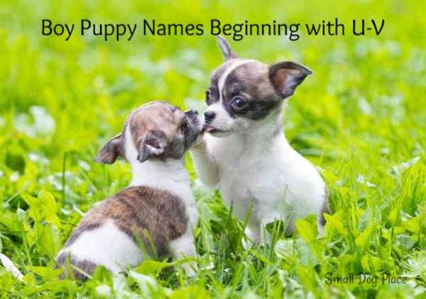 Boy Puppy Names Beginning with U-V