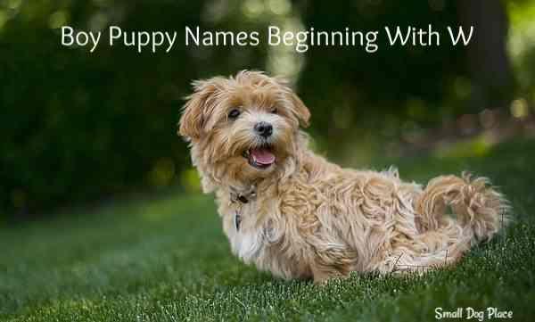 Boy Puppy Names Beginning with W