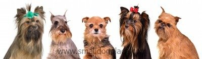 Pictures of Five Different Small Dog Breeds
