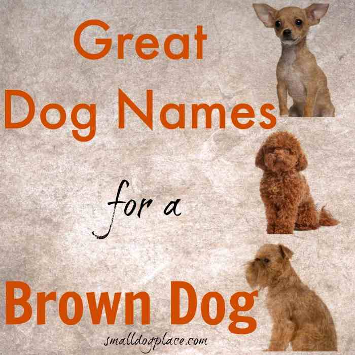 Great Brown Dog Names For Your Puppy