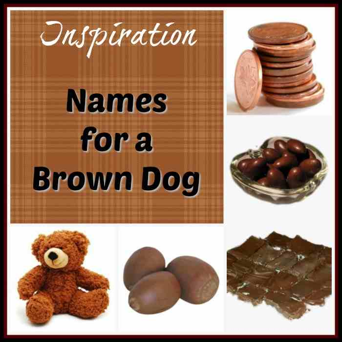 Inspiration for Brown Dog Names