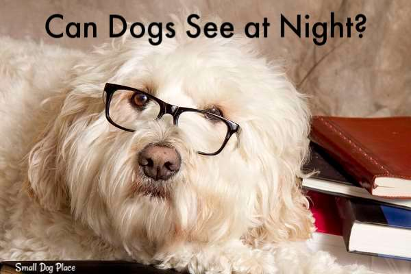 Can Dogs See at Night?
