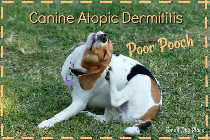 Link to the Canine Atopic Dermatitis Informative Article