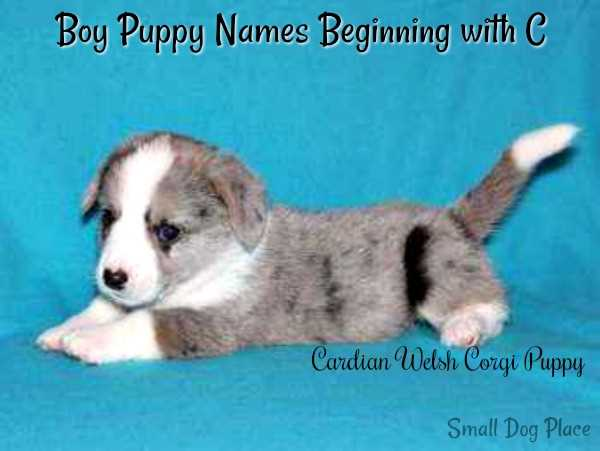 Boy Puppy Names Beginning with C