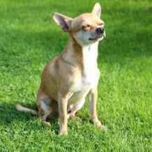 Longest-Lived Dog Breeds