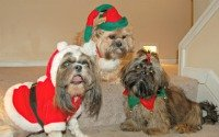Keep your pets safe this holiday season