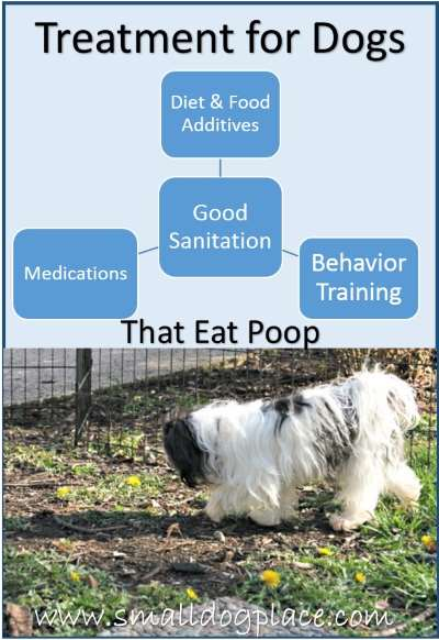 Dogs that eat poop/feces