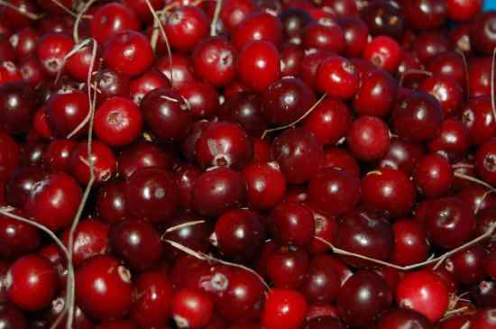 Vegetables for Dogs:  Cranberries