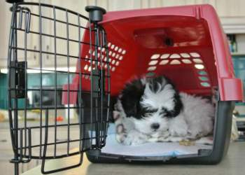 Crate Training for Small Dog Breeds