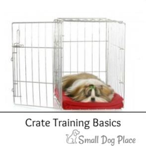 Crate Training Basics for Small Dogs Link