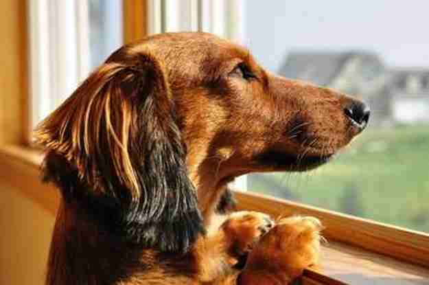 Dog Depression:  Is it Real?