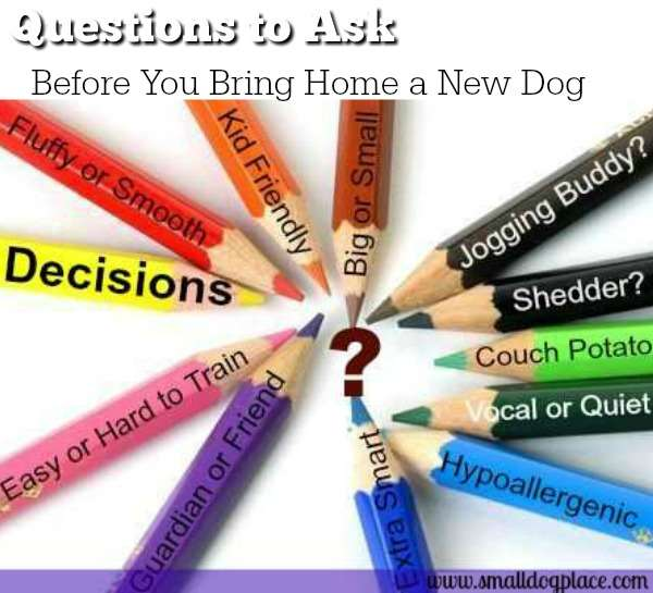 Small Dogs:  An Introduction  Decisions that you should make before bringing home that new dog.