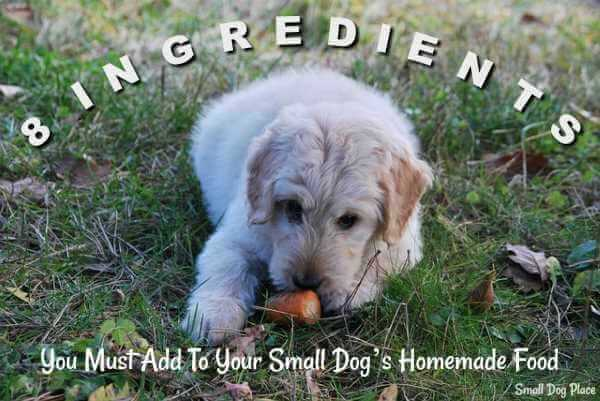 8 Ingredients to add to small dogs' homemade food.