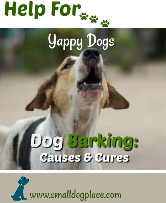 Quiet a yappy dog:  Dog Barking:  Causes and Cures