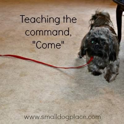 Basic Dog Command,