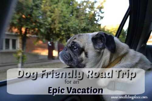 Dog Friendly Road Trip Planner