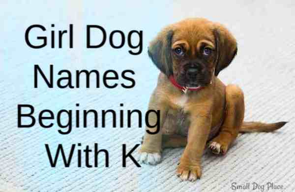 Girl Dog Names Beginning With K