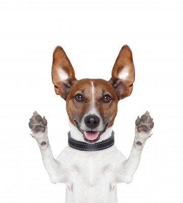Dog Humor, Dog Dictionary
