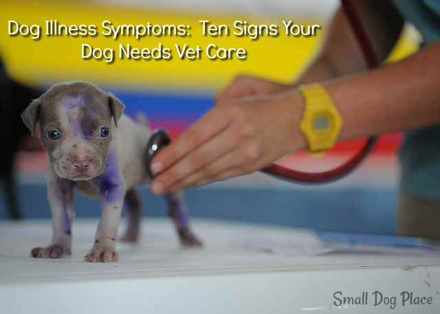Dog Illness Symptoms:  Ten Signs Your Dog Needs Vet Care