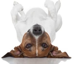 Dog Humor, Dog Prayer