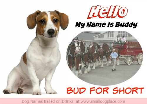 Buddy or Bud for short is a great example of a dog name based on a type of Beer.