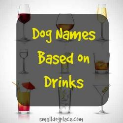 Dog Names Based on Drinks
