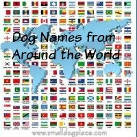 Dog Names Based on the Breed's Country of Origin
