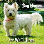 Dog Names for White Dogs
