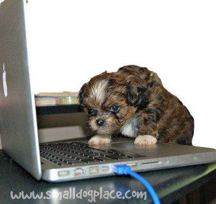 Dog Names Based on Technology